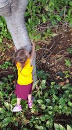 Little tree hugger during trip to a lagoon on Oahu Hawaii 2015
